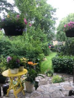 Virtual Garden Tour, Real Joy and Inspiration